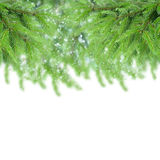 Fir tree border Stock Images