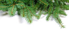 Fir tree branch Stock Images
