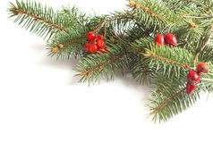 Fir-tree branch Stock Image