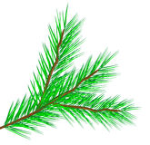 Fir tree branch Stock Photography