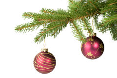 Fir tree branch Royalty Free Stock Photography