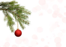 Fir-tree branch Royalty Free Stock Images