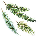Fir-tree branch. Beautiful vector image with nice watercolor fir-tree branch Stock Image
