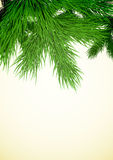 Fir tree branch. Christmas background with a fir tree branch in the top part. EPS10 vector Royalty Free Stock Photos