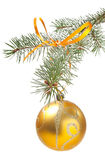 Fir-tree branch with christmas ball Stock Image