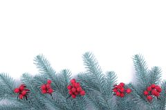 Fir tree branch on white background royalty free stock photos