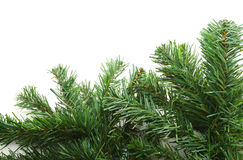 Fir tree branch Royalty Free Stock Photos