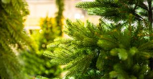Fir tree branch closeup, new year, christmas Stock Images