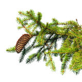 Fir tree branch with cone isolated on white. Macro photo of fir tree branch with cone isolated on white stock photography