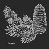 Fir tree branch with cone and needle leaves hand drawn sketch royalty free stock photos