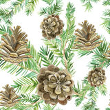 Fir tree branch with cone. Watercolor seamless background. Stock Image