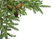 Fir tree branch with cones. Isolated on white. Christmas decoration Stock Photos