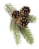 Fir-tree branch with cones Royalty Free Stock Images