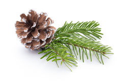 Fir tree branch and cones isolated on white background. Royalty Free Stock Photos