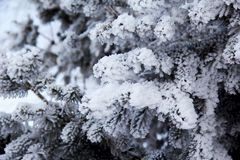 Fir tree branch covered with fresh fluffy snow on a quiet cloudy day stock photo
