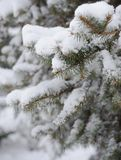 Fir-tree Branch Covered with Snow. Christmas Background Royalty Free Stock Images