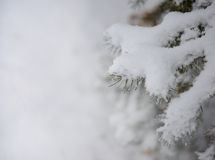 Fir-tree Branch Covered with Snow. Christmas Background Royalty Free Stock Photo