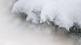 Fir-tree Branch Covered with Snow. Christmas Background Royalty Free Stock Image