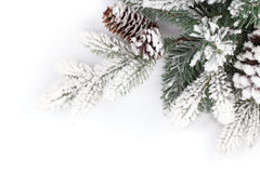 Fir tree branch covered with snow Royalty Free Stock Photos