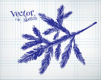 Fir tree branch. Drawn on checkered paper Royalty Free Stock Photos
