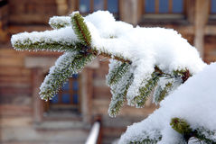 Fir-tree branch in front of a chalet Stock Photo