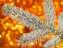Fir tree branch on golden background Royalty Free Stock Images