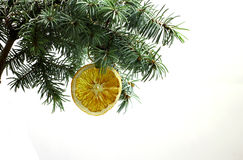 Fir tree branch isolated with dry slice of orange Royalty Free Stock Images