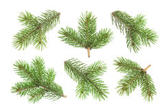 Fir tree branch isolated on white background Royalty Free Stock Photo