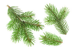 Fir tree branch isolated on white background Stock Photos