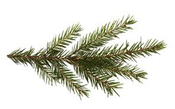 Fir tree branch isolated on a white background Stock Photography