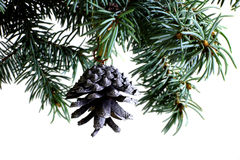 Fir tree branch isolated on white with fir pine cone Stock Photos