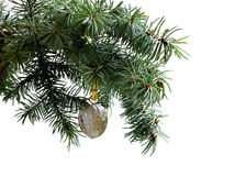 Fir tree branch isolated on white with  walnut Stock Photos