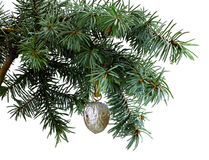 Fir tree branch isolated on white with  walnut Royalty Free Stock Photos