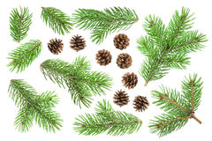 Fir tree branch and pine cones isolated on white background Royalty Free Stock Images