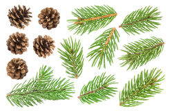 Fir tree branch and pine cones isolated on white background Royalty Free Stock Photography