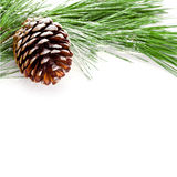 Fir tree branch with pinecone Stock Photo