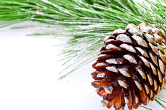 Fir tree branch with pinecone Stock Photography