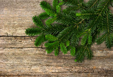 Fir tree branch on rustic wooden background Royalty Free Stock Photography