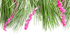 Fir tree branch with serpentine Stock Images