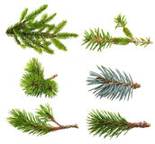 Fir tree branch set. Isolated on white Royalty Free Stock Photos