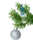 Fir tree branch with silver ball Stock Image