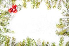 Fir tree branch and snow Stock Image