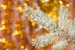 Fir tree branch with snow on golden Royalty Free Stock Photo