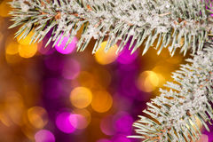 Fir tree branch with snow on golden Stock Photography