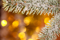 Fir tree branch with snow on golden Stock Images