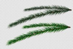 Fir-tree Branch on transparent vector background. stock illustration