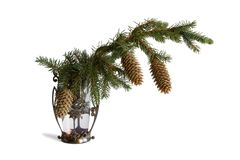 The fir-tree branch in a vase. On white background Royalty Free Stock Photography