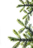 Fir tree branch on a white background. Close up. Christmas decor Stock Photos