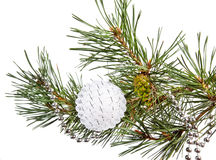 Fir tree branch with white Christmas ball Stock Images