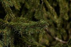 Fir-tree branch. Wood. Stock Photos
